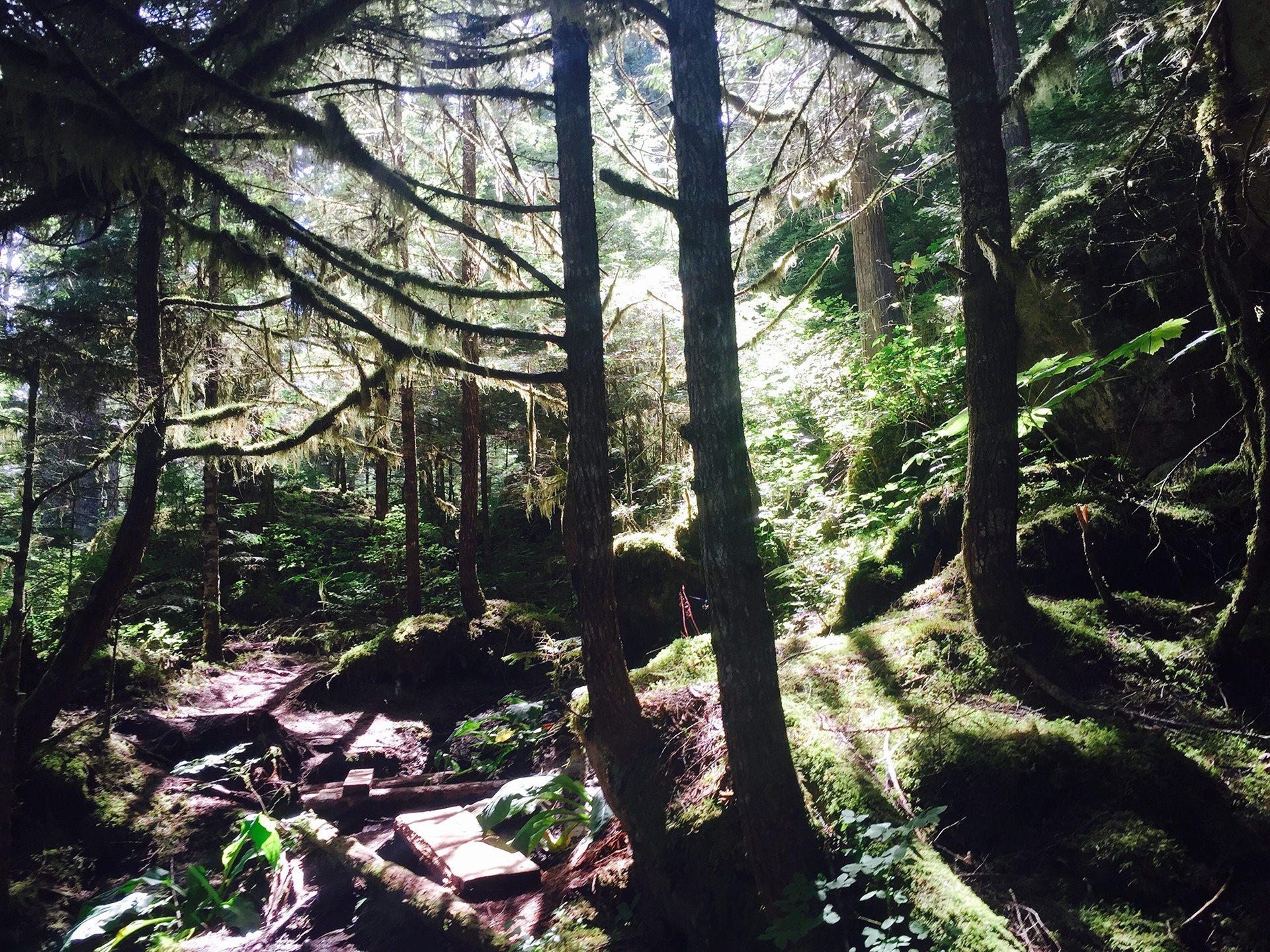 Great-Bear-Rainforest-Bella-Coola-BC-Yoho-Adventures-