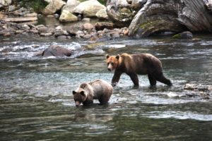 Bear Viewing British Columbia