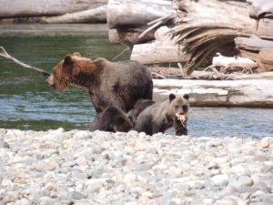Wildlife Tours Bella Coola