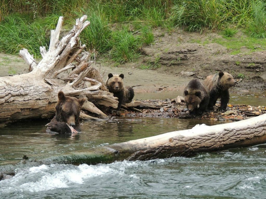 Grizzly Bear Tours BC