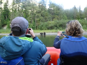 Bear Tours Yoho Adventures